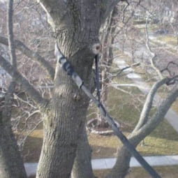 tree+cabling+4