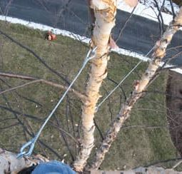 tree+cabling+wire+4